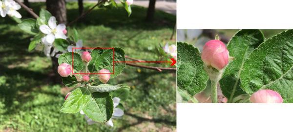 نقد و بررسی گوشی اپل آیفون اسای - نمونه عکس دوربین